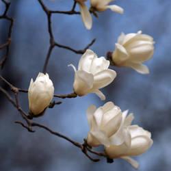 Spring Blossom by kucingitem