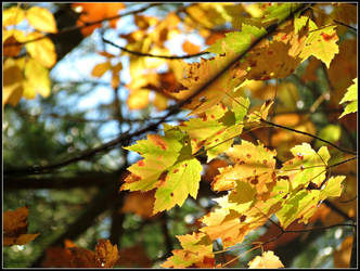 Golden Autumn by Michies-Photographyy