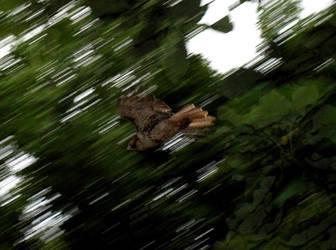 .:Hawk:. by beckhamsoccer23