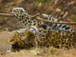 leopard72 by redbeard31