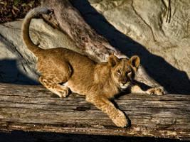 lion241 by redbeard31