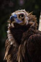 aves458 by redbeard31