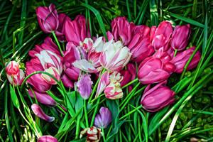 flower581 by redbeard31