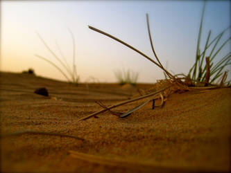 Life in the Desert by poetry-for-purpose