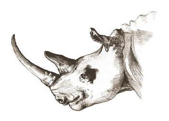 sketchbook: pencils: White Rhinoceros by tnoone