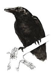 sketchbook: markers: Raven by tnoone