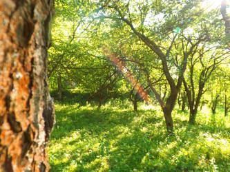 Behind The Nearest Tree by Alex-Mars