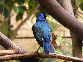 Blue Birdie 2 by Ariva16-pet