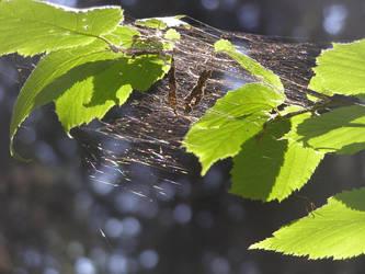 spidersweb by psychotic-naruto-fan