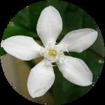 White Angel Snowflake by AnniverseStash