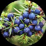 Juniper Berry by AnniverseStash