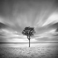 Tree Study by SerdarAKIN