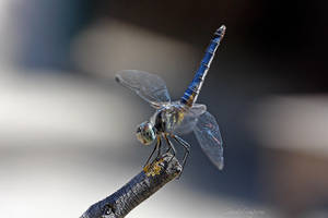 FAITHFUL BLUE 1 by Sandy33311