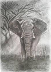 elephant by ThomasLiu