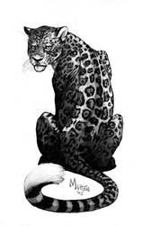 Jaguar by caramitten