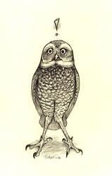 Burrowing Owl by caramitten
