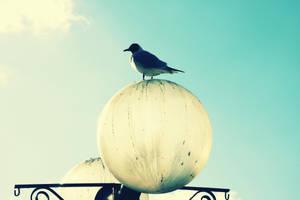 Bird by CowboyFromHull
