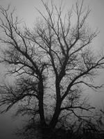 Tree 3 by Lonsdalegirl