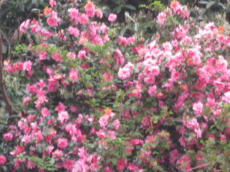 pink bush by liznixXbakura