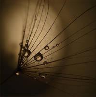 Moonlight by marrgit