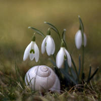 Springtime? by marrgit