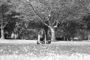 Summer days by Sliktor