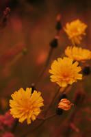 Setting Flowers 2 by Sliktor