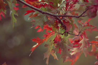 Autumn warms our hearts by Sliktor
