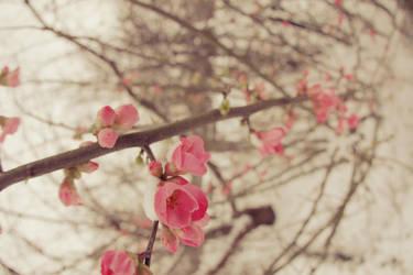 A cold Spring by Sliktor