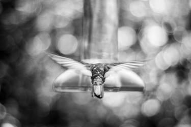 Wing stretch by Sliktor