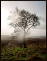Ghost Tree by Sliktor