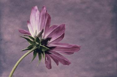Purple One by kleinerteddy