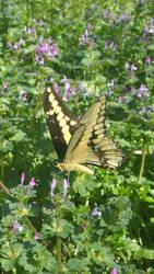 Happy Butterfly by dragonlady864