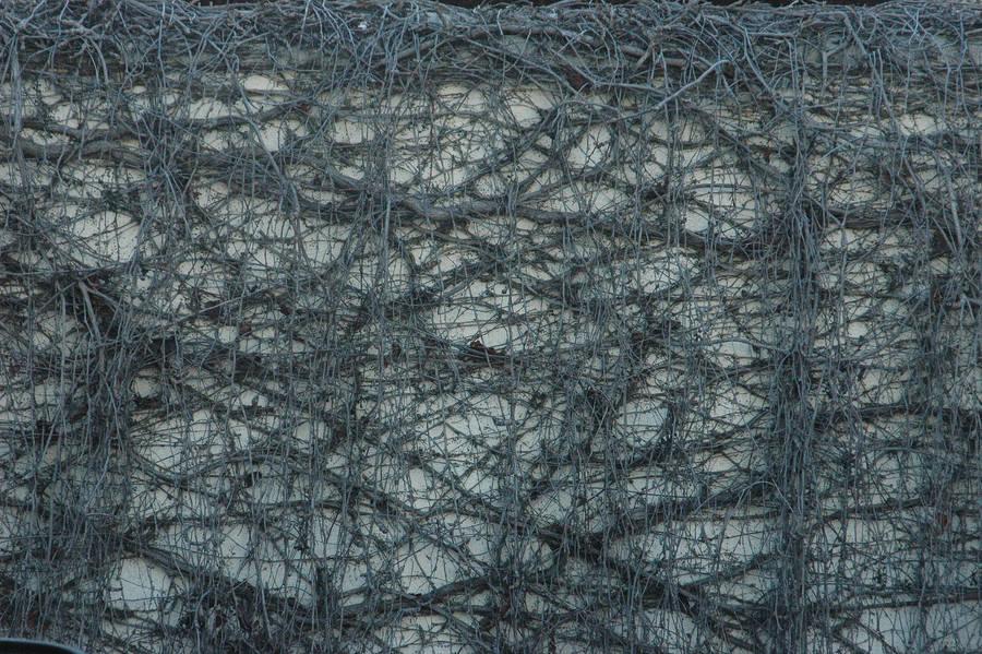 Vine Texture 2 by Jenifer10