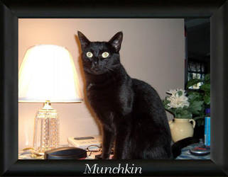 Munchkin - Archives Oct. 2004 by LindaLee
