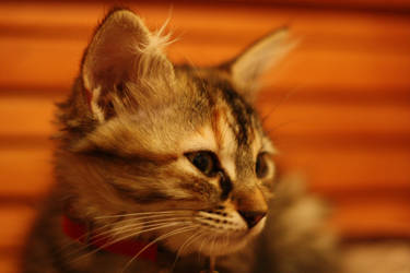 Chaton by Guilou