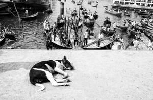 A Dog's Dream by ZiaulKareem