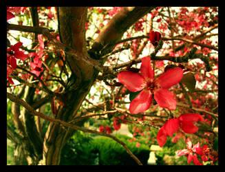 My Tree II by topjamen