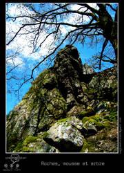 Roches, mousse et arbre by regisburin