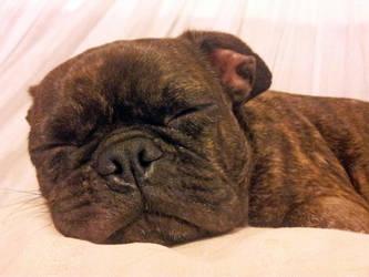 Sleepy Time by masimage