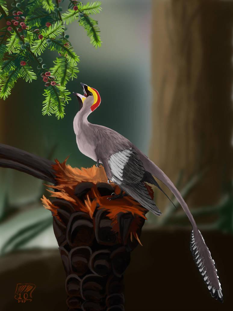 Jehol Bird and Arils by MattMart