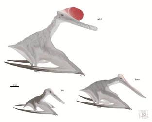 Boreopterus cuiae by MattMart