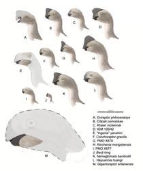 Oviraptoridae Updated by MattMart