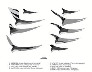 Pteranodont Profiles by MattMart