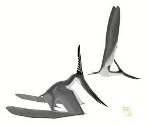 Male Pteranodon longiceps by MattMart