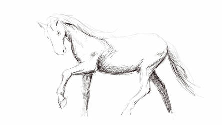 horse sketch by marcobusoni