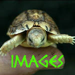 Images Gallery Icon by MagicalJoey