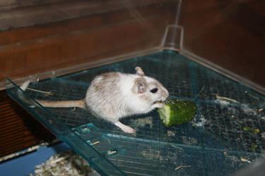 With cucumber by sasha-temnikova