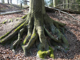 roots stock by Mihraystock