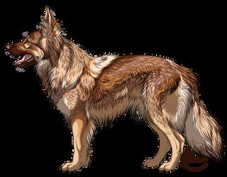 Altdeutscher Schaferhund liver sable by Lunewen